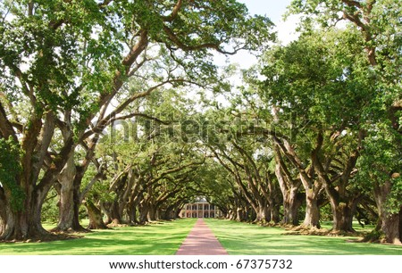 Oak Alley Plantation tree lined lane, leafy vines and Plantation House