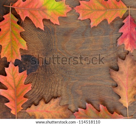 Oak autumn leaves on the background a dark old wood