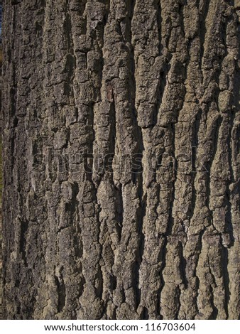 oak bark close-up as background