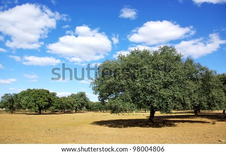 oak forest at mediterranean region - stock photo