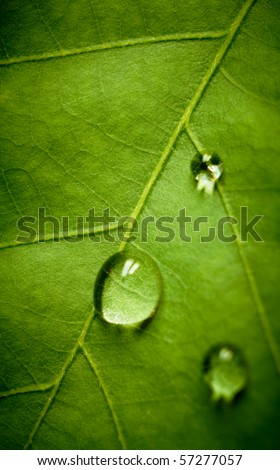 Oak green leaf and water drop on it, shallow dof.
