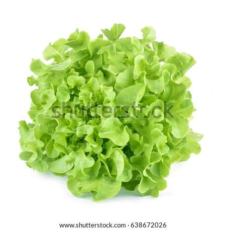 Oak leaf lettuce isolated on white. #638672026