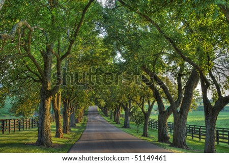 Oak lined lane in summertime