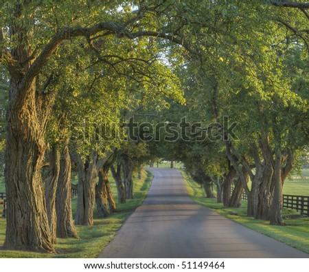 Oak lined rural lane in evening sun