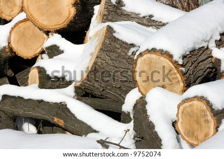 Oak logs under a layer of a snow #9752074