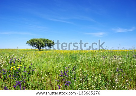 Oak tree in flowery field on spring.
