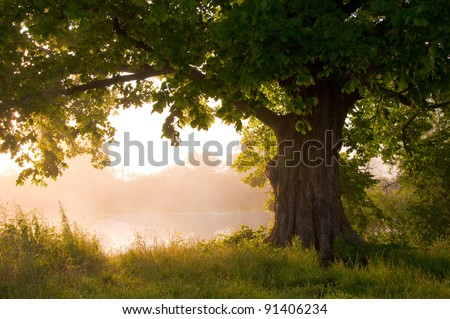 Oak tree in full leaf in summer standing alone #91406234