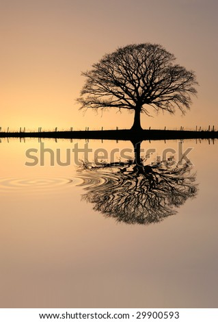 Oak tree in winter at sunset in silhouette against a golden sky with reflection over rippled water.