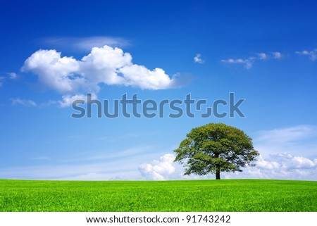 Oak tree on green field