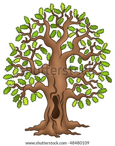 Tree  on Oak Tree On White Background   Color Illustration    48480109