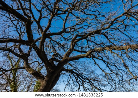 Oak tree. Quercus is a genus of plants belonging to the Fagaceae family, comprising the trees commonly called oaks. #1481333225