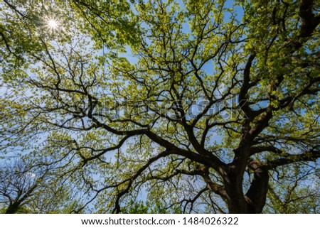 Oak tree. Quercus is a genus of plants belonging to the Fagaceae family, comprising the trees commonly called oaks. #1484026322