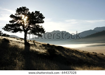 Oak Tree Silhouetted on Frosty Foggy Morning in Rock Mountain National Park