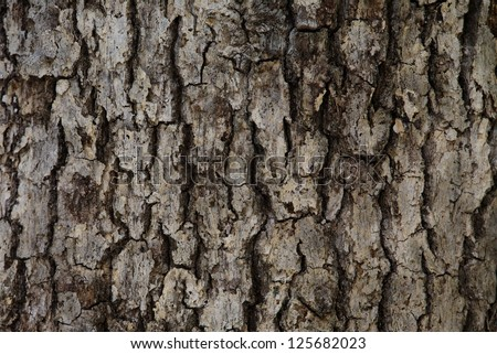 Oak Tree Trunk Bark abstract background texture detail