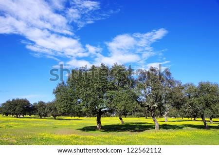 Oak trees at portuguese field - stock photo