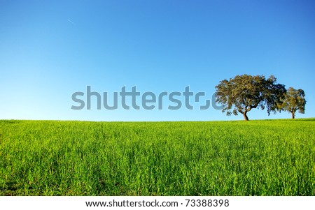 Oak trees in a wheat field at Portugal. - stock photo