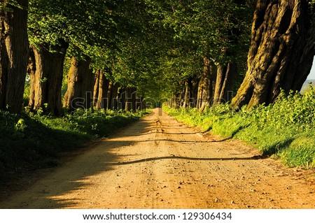 Oaks Avenue Charleston SC plantation Live Oak trees forest landscape in ACE Basin South Carolina lowcountry