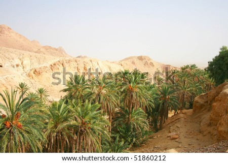 Oasisin mountains at border of Sahara