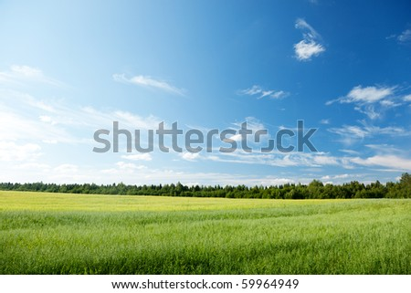 oat field and sunny sky #59964949