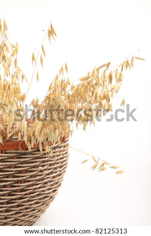 Oat isolated on white background