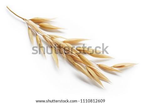 oat plant isolated on white background #1110812609