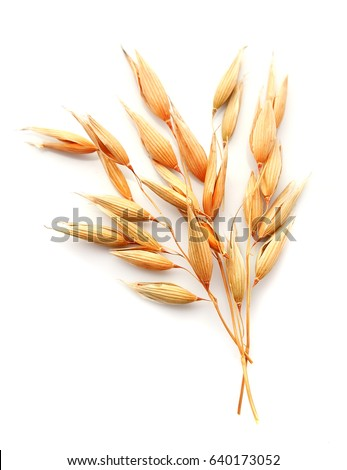 Oat plant isolated on white close up . #640173052
