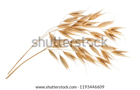Oat plant isolated on white without shadow #1193446609