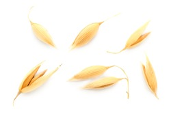 Oat seeds are isolated on white with a shadow. Oat seeds isolated on a white background. Set of oat grains isolated on white background. Top view of oat grains.