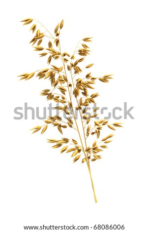oats (clipping path)