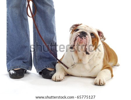 obedience training - woman standing beside bulldog laying down looking at handler