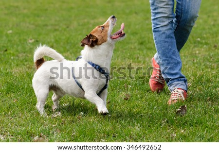 Obedient dog doing walking exercise with owner