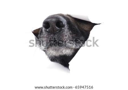object on white - muzzle dog close up
