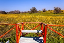 Observation deck with red railings at the edge of the field. Lovely warm day. Fields of flowers in the bright southern sun. Israel, Negev desert