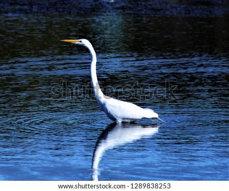 OBX wildlife birds #1289838253