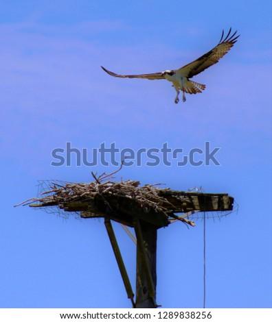 OBX wildlife birds #1289838256
