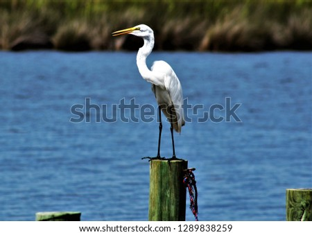OBX wildlife birds #1289838259