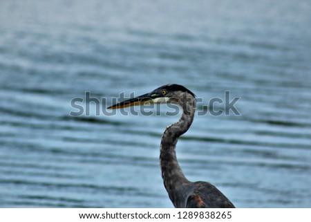 OBX wildlife birds #1289838265