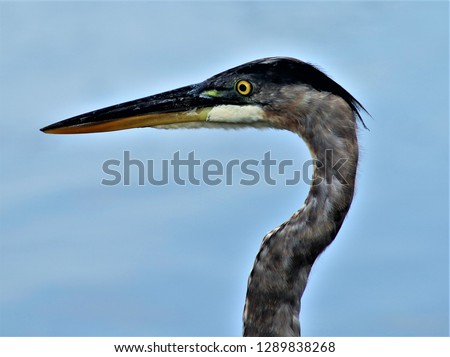 OBX wildlife birds #1289838268