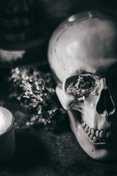 Occult mystic ritual halloween witchcraft scene - human scull, candles, dried flowers, moon and owl. Black and white photo.