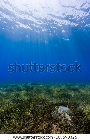 Ocean background - Sun rays cut down through dark blue water creating a dancing dappled light effect on a shallow seagrass seabed in the Egyptian Red Sea town of Nuweiba