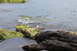 Ocean birds or sea birds are birds adapted to the marine environment, such as albatrosses, and should not be confused with coastal birds since, unlike these, they only come to land with the intention