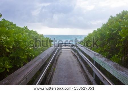 Ocean Boardwalk Surrounded by Green Foliage