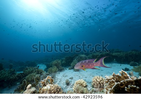 Ocean,coral and fish