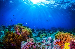 Ocean coral reef underwater. Sea world under water background