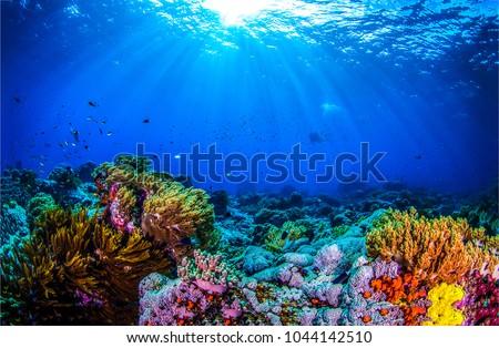 Ocean coral reef underwater. Sea world under water background Stock photo ©
