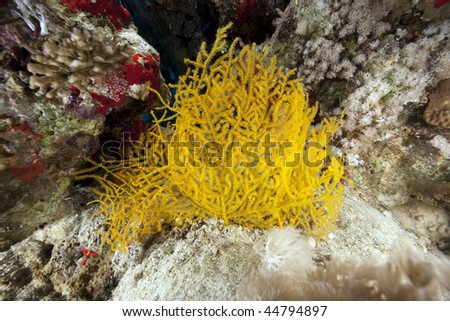 Ocean,fish and coral - stock photo