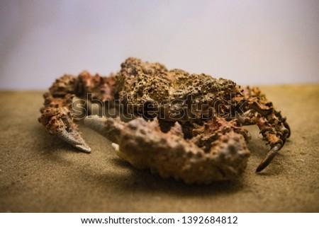 Ocean Life Crab Deep Sea #1392684812