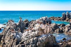 Ocean rocks with brown pelicans in Vina del Mar, Chilehttps://cdn.shutterstock.com/shutterstock/pending_photos/846805457/thumb.jpg