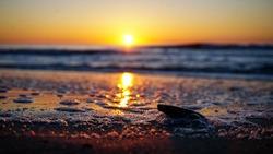 Ocean Sea Foam at Sunrise