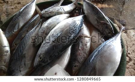 Ocean Sea Tuna #1280849665